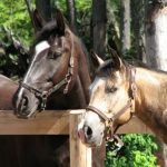 Equitazione Riccione