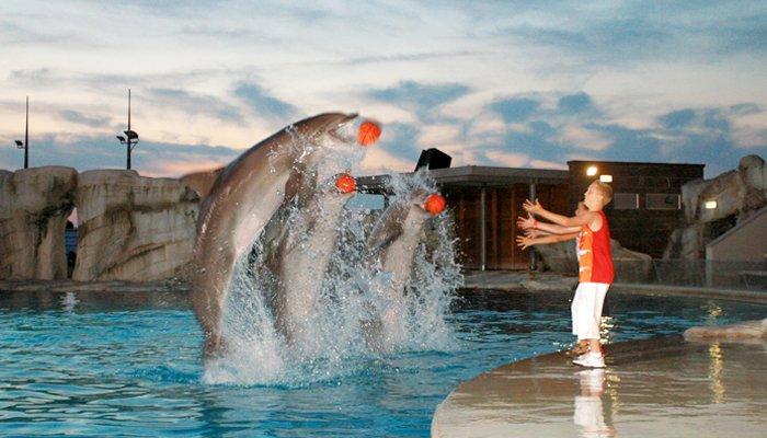 Divertimento tra piccoli e delfini a Oltremare Riccione