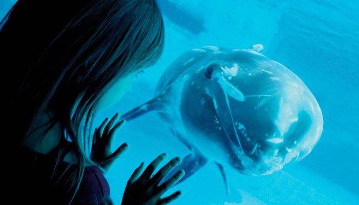 Delfino in avvicinamento presso l'aquario di Oltremare Riccione